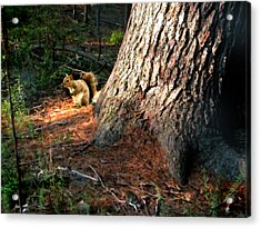 Furry Neighbor Acrylic Print by Paul Sachtleben