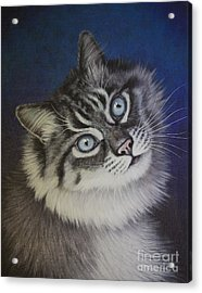 Furry Tabby Cat Acrylic Print