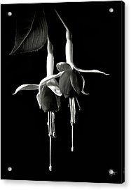 Fuschias In Black And White Acrylic Print by Endre Balogh
