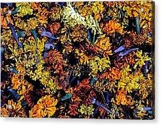 Future Marigolds Acrylic Print