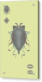 Fuzzy Eared Horsefly Specimen Acrylic Print