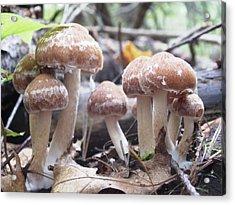 Fuzzy Fungi Acrylic Print by Martha Ayotte