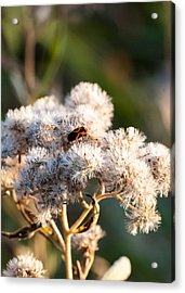 Fuzzy With Bug Acrylic Print