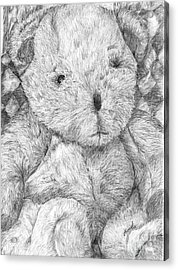 Acrylic Print featuring the drawing Fuzzy Wuzzy Bear  by Vicki  Housel