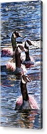 Acrylic Print featuring the painting Gaggle Of Geese by Jim Phillips