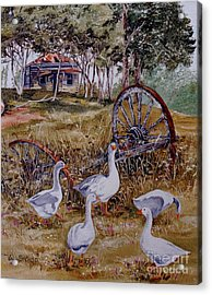 Gaggling Geese Acrylic Print by Val Stokes
