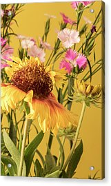 Gaillardia And Dianthus Acrylic Print by Richard Rizzo