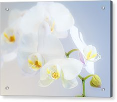 Gail's Orchids Acrylic Print
