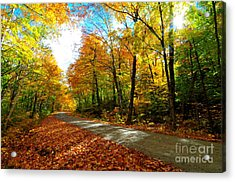 Gale River Road  Acrylic Print by Catherine Reusch Daley