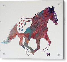 Galloping Apaloosa Acrylic Print