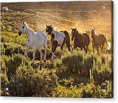 Galloping Down The Mountain Acrylic Print