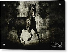Galloping Horse Artwork Acrylic Print