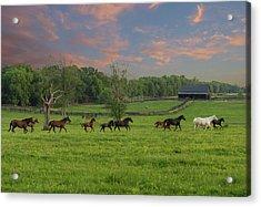 Galloping In The Kentucky Bluegrass Acrylic Print