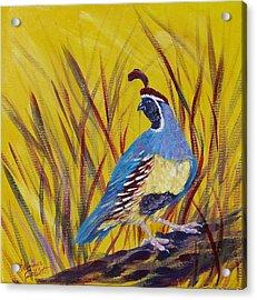 Gamble Quail Acrylic Print by Summer Celeste