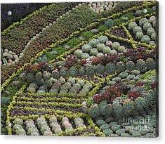 Garden 4 Acrylic Print