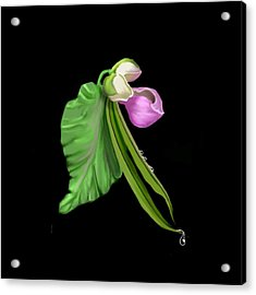 Garden Bean Acrylic Print