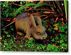 Garden Bunny Acrylic Print by Helen Carson