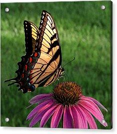 Garden Dancer Acrylic Print by Don Spenner