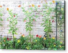 Garden Florals Acrylic Print by Carolyn Dalessandro
