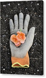 Garden Glove And Flower Blossoms4 Acrylic Print