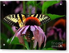 Garden Greetings Acrylic Print by Lois Bryan