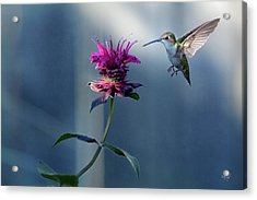 Acrylic Print featuring the photograph Garden Jewelry by Everet Regal
