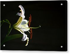 Acrylic Print featuring the photograph Garden Lily by Elsa Marie Santoro