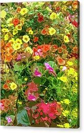 Garden Of Color Acrylic Print by Josy Cue