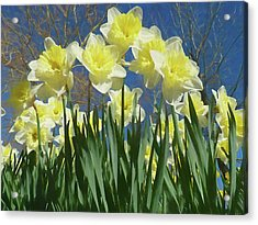 Acrylic Print featuring the photograph Garden Of Daffodils by Donna Kennedy