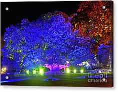 Acrylic Print featuring the photograph Garden Of Light By Kaye Menner by Kaye Menner