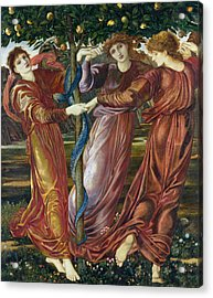 Garden Of The Hesperides Acrylic Print by Sir Edward Burne Jones