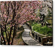 Garden Path No. 2 Acrylic Print by Joe Bonita