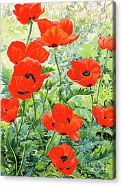 Garden Red Poppies Acrylic Print by Christopher Ryland