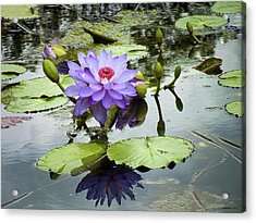 Garden Reflaections Acrylic Print
