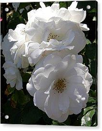 Garden Roses Photo Acrylic Print by Judy Mercer