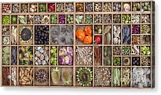 Garden Seed Pods Acrylic Print by Tim Gainey