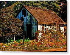 Garden Shed Acrylic Print by Helen Carson