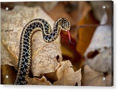 Garden Snake Acrylic Print by Eleanor Abramson