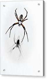 Garden Spider With Shadow Acrylic Print by Tamyra Ayles