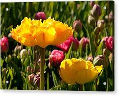 Garden Sunshine Acrylic Print by Charlet Simmelink
