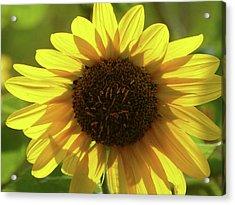 Garden Sunshine Acrylic Print