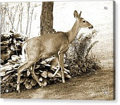 Acrylic Print featuring the photograph Garden Visitor by Betsy Zimmerli