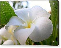 Garden White Acrylic Print
