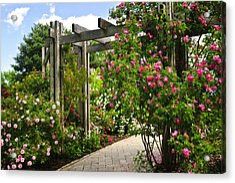 Garden With Roses Acrylic Print