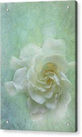Gardenia Acrylic Print by Catherine Alfidi