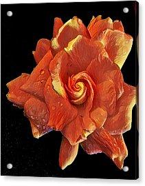 Gardenia For Madam Pele Acrylic Print