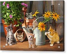 Gardening Kittens Acrylic Print by Bob Nolin