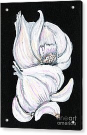 Garlic 2 Acrylic Print by Elaine Hodges