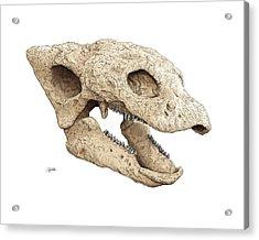 Gastonia Burgei Skull Acrylic Print