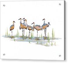 Gathering Acrylic Print